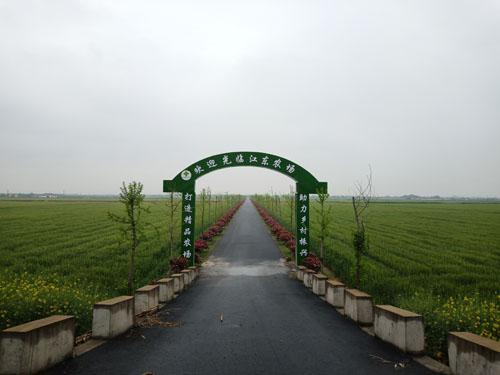 杭州江东农场多举并措确保春耕生产2 副本.jpg